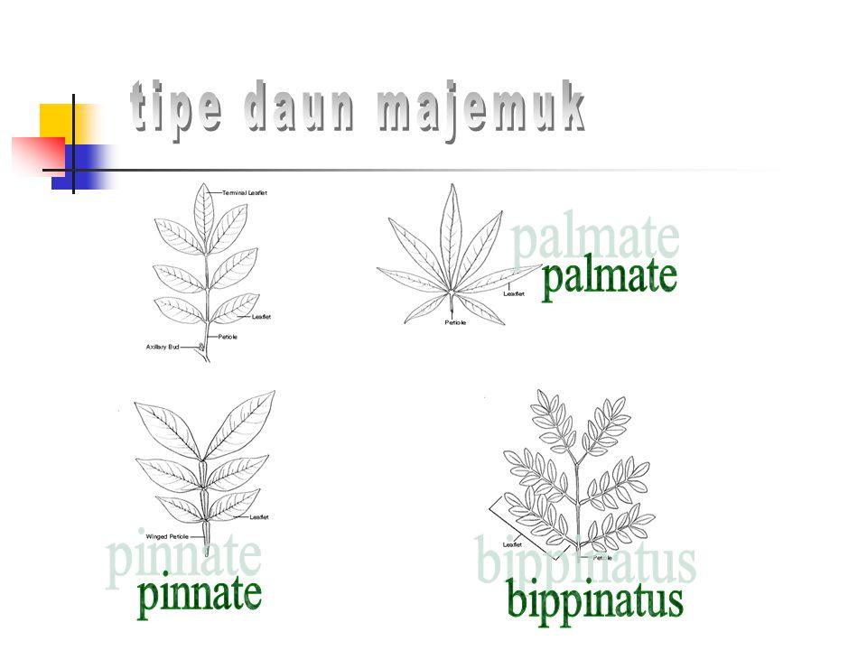 tipe daun majemuk palmate pinnate bippinatus