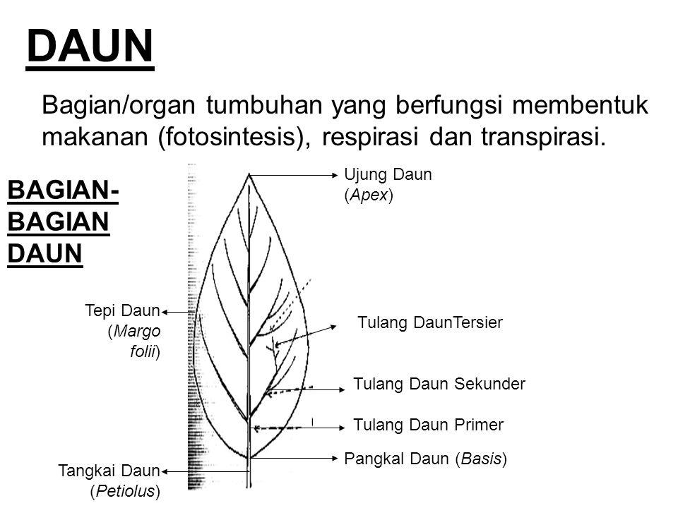 DAUN Bagian/organ tumbuhan yang berfungsi membentuk makanan (fotosintesis), respirasi dan transpirasi.