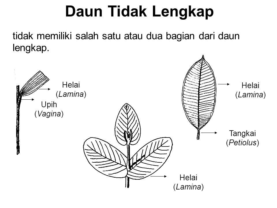 Daun Tidak Lengkap tidak memiliki salah satu atau dua bagian dari daun lengkap. Helai (Lamina) Tangkai (Petiolus)