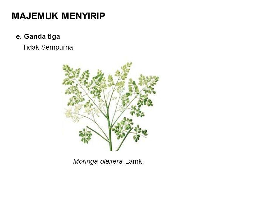 MAJEMUK MENYIRIP e. Ganda tiga Tidak Sempurna Moringa oleifera Lamk.
