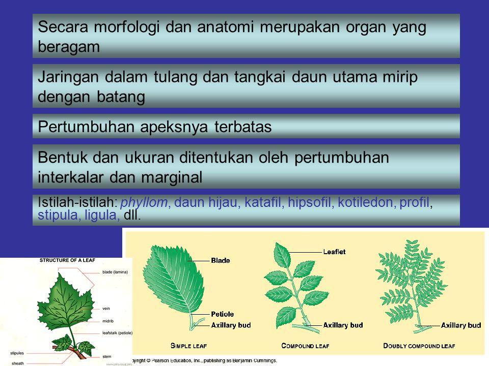 Secara morfologi dan anatomi merupakan organ yang beragam