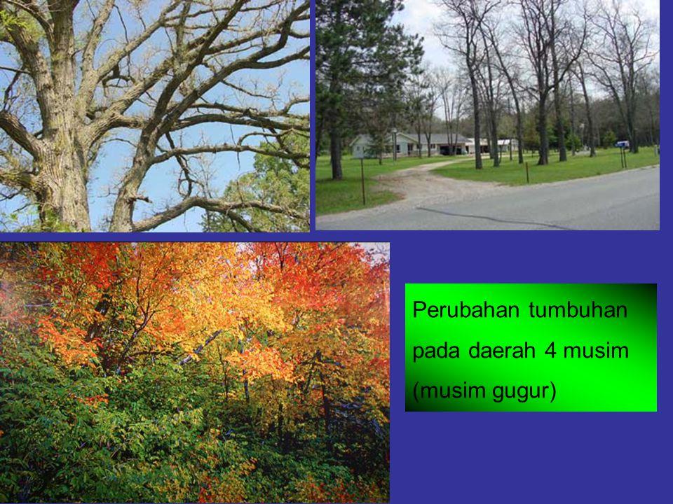 Perubahan tumbuhan pada daerah 4 musim (musim gugur)