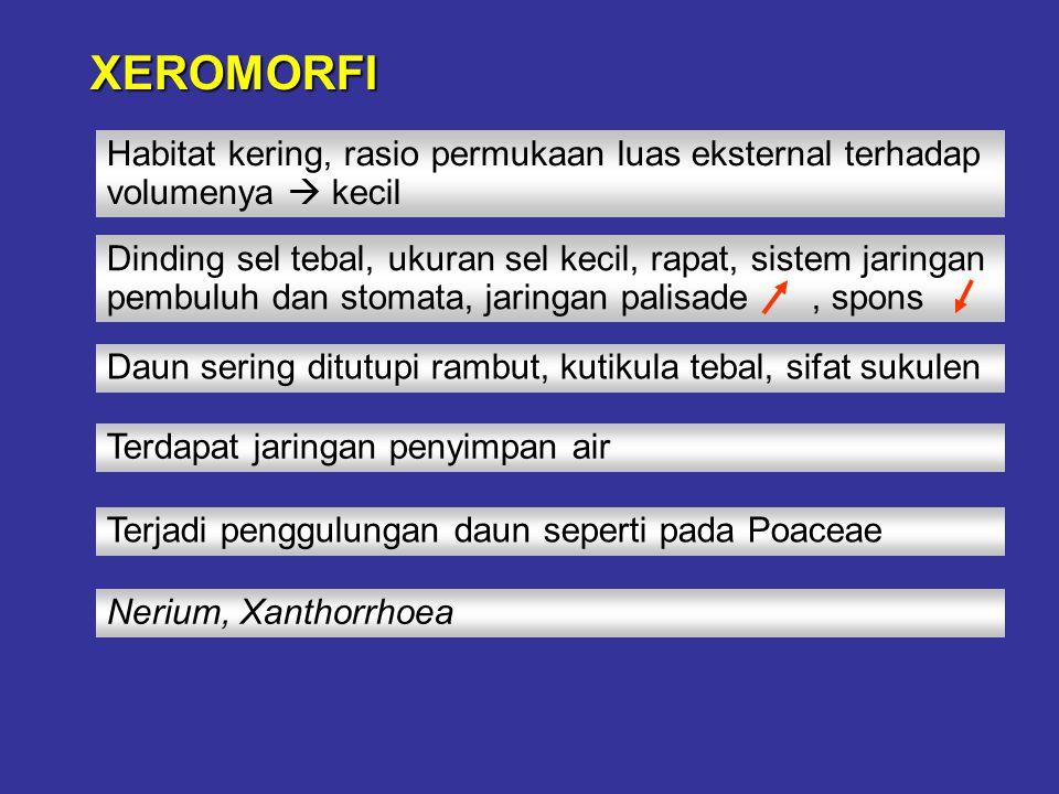 XEROMORFI Habitat kering, rasio permukaan luas eksternal terhadap volumenya  kecil.
