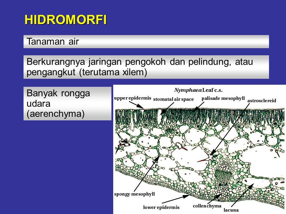 HIDROMORFI Tanaman air