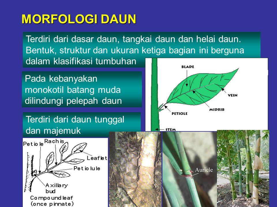 MORFOLOGI DAUN Terdiri dari dasar daun, tangkai daun dan helai daun. Bentuk, struktur dan ukuran ketiga bagian ini berguna dalam klasifikasi tumbuhan.