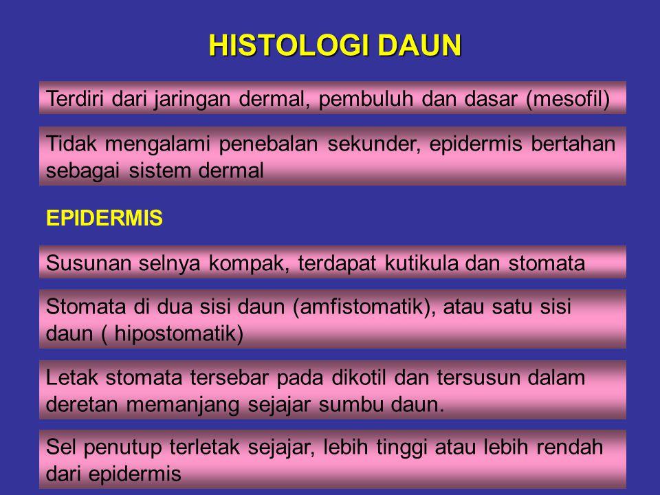 HISTOLOGI DAUN Terdiri dari jaringan dermal, pembuluh dan dasar (mesofil)
