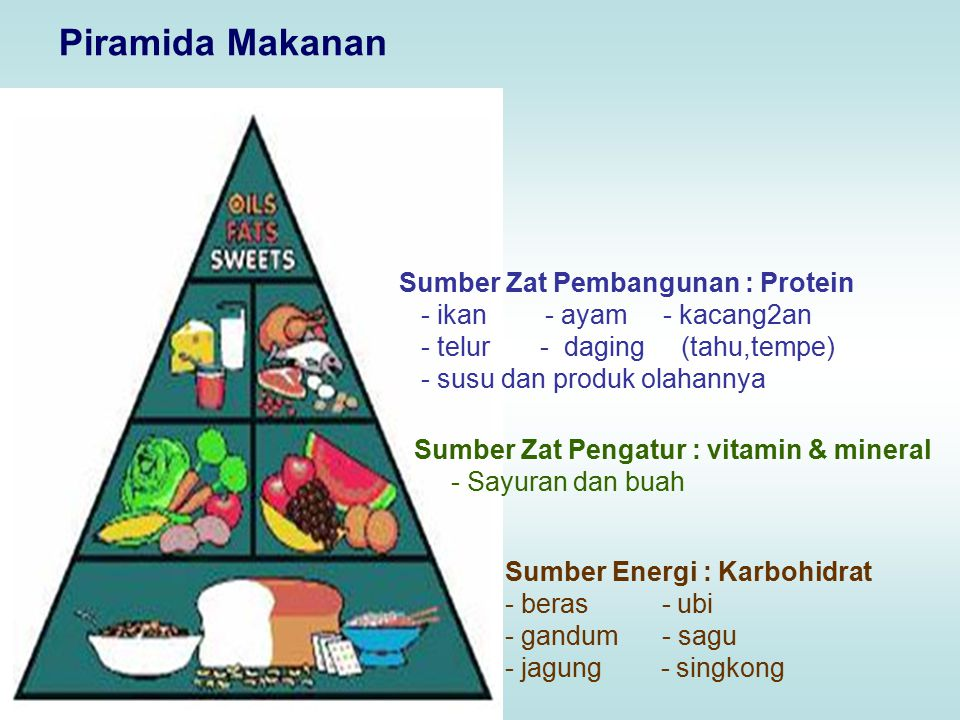 Piramida Makanan Sumber Zat Pembangunan : Protein