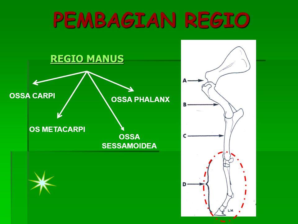 PEMBAGIAN REGIO REGIO MANUS OSSA CARPI OSSA PHALANX OS METACARPI
