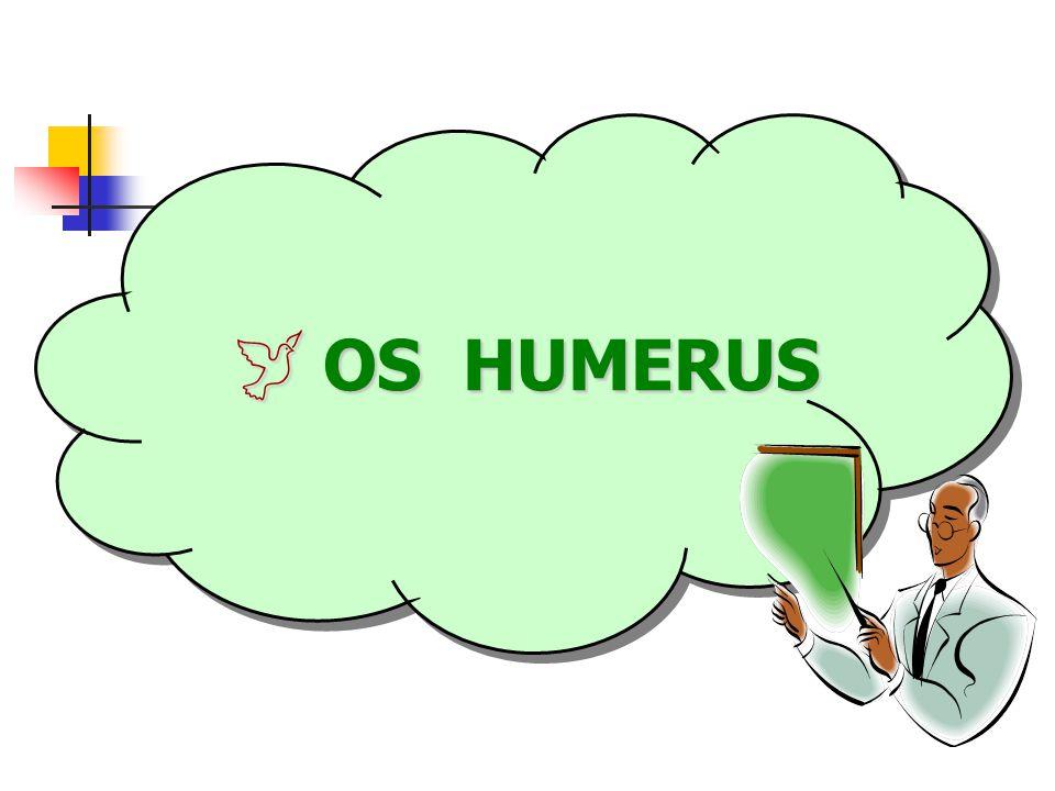 OS HUMERUS