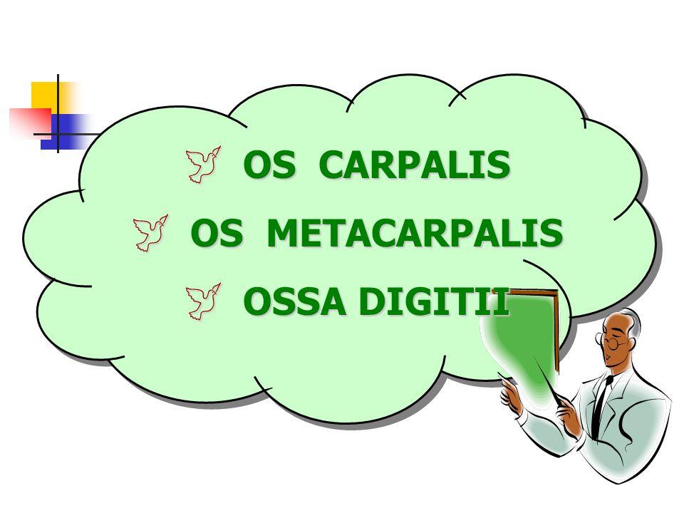 OS CARPALIS OS METACARPALIS OSSA DIGITII