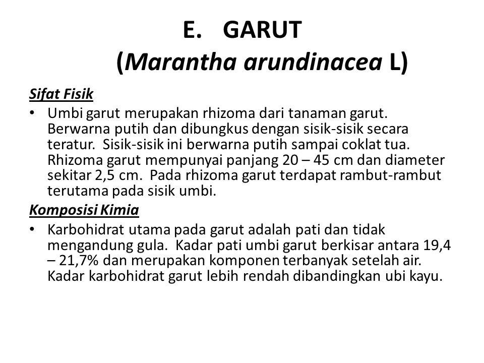 GARUT (Marantha arundinacea L)