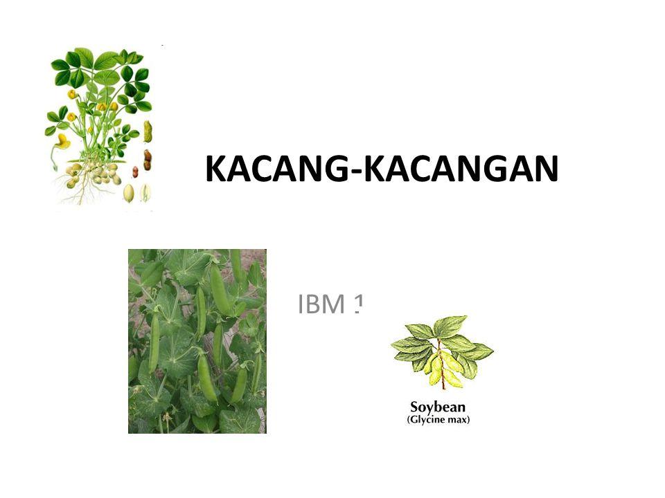 KACANG-KACANGAN IBM 1