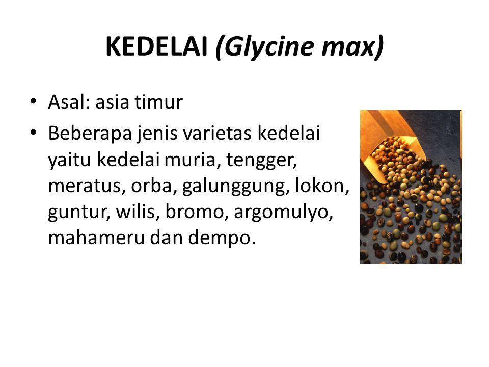 KEDELAI (Glycine max) Asal: asia timur