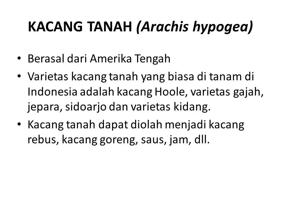 KACANG TANAH (Arachis hypogea)