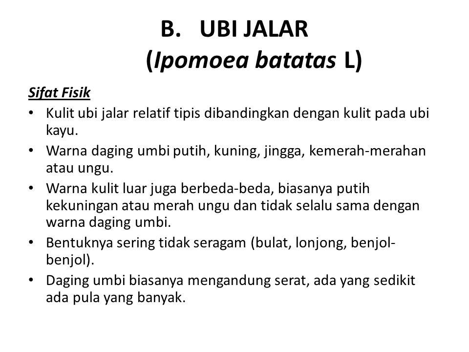 UBI JALAR (Ipomoea batatas L)