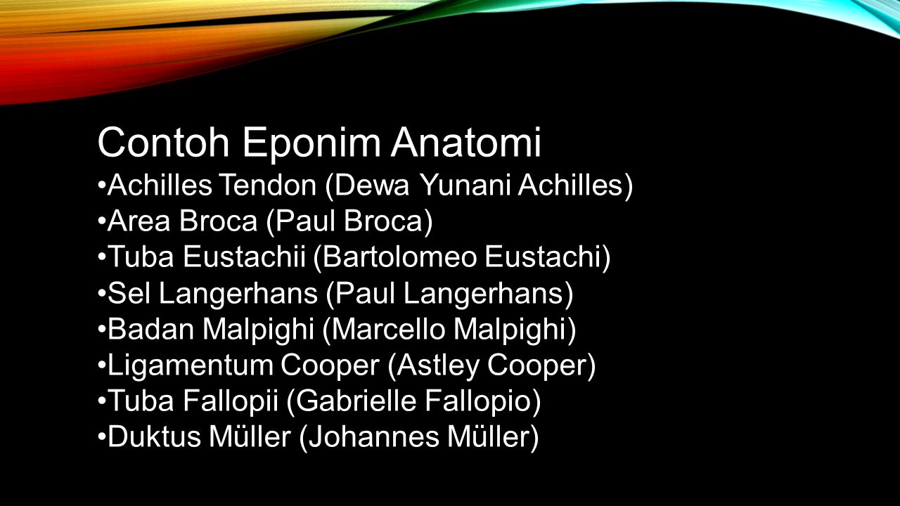 Contoh Eponim Anatomi •Achilles Tendon (Dewa Yunani Achilles)