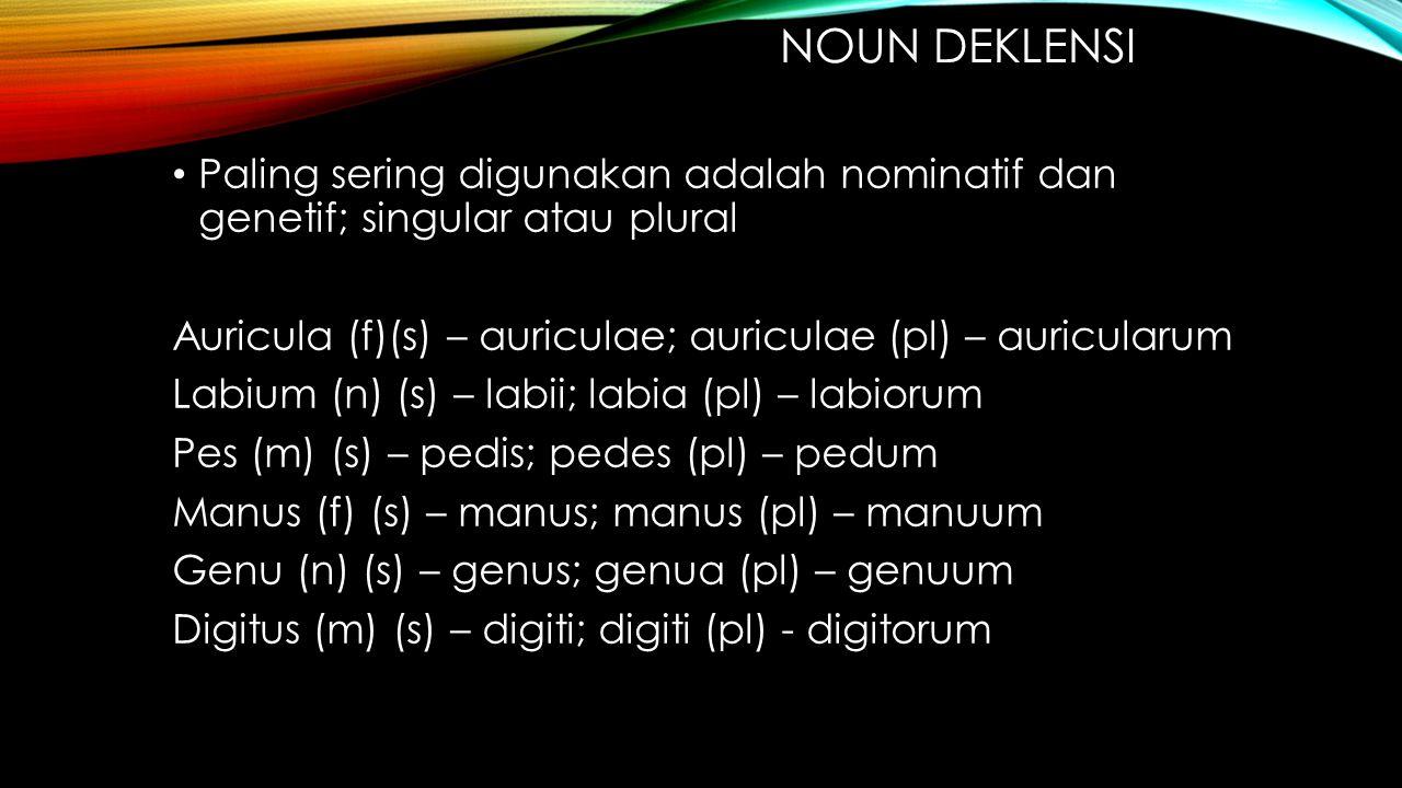 Noun deklensi Paling sering digunakan adalah nominatif dan genetif; singular atau plural. Auricula (f)(s) – auriculae; auriculae (pl) – auricularum.