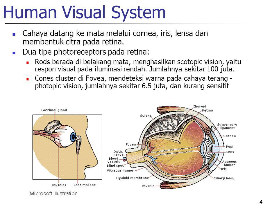 Human Visual System Cahaya datang ke mata melalui cornea, iris, lensa dan membentuk citra pada retina.