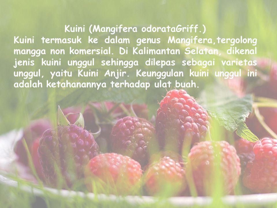 Kuini (Mangifera odorataGriff.)