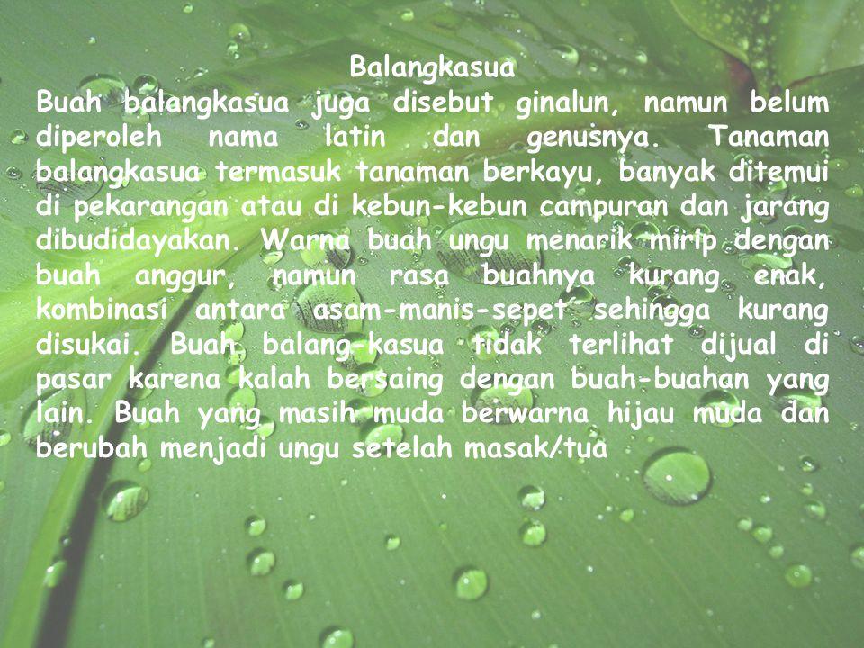 Balangkasua