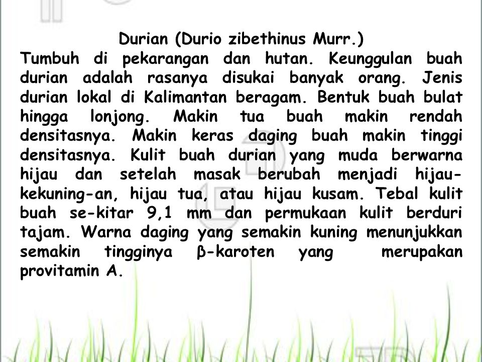 Durian (Durio zibethinus Murr.)