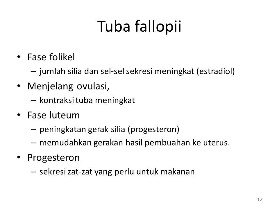 Tuba fallopii Fase folikel Menjelang ovulasi, Fase luteum Progesteron