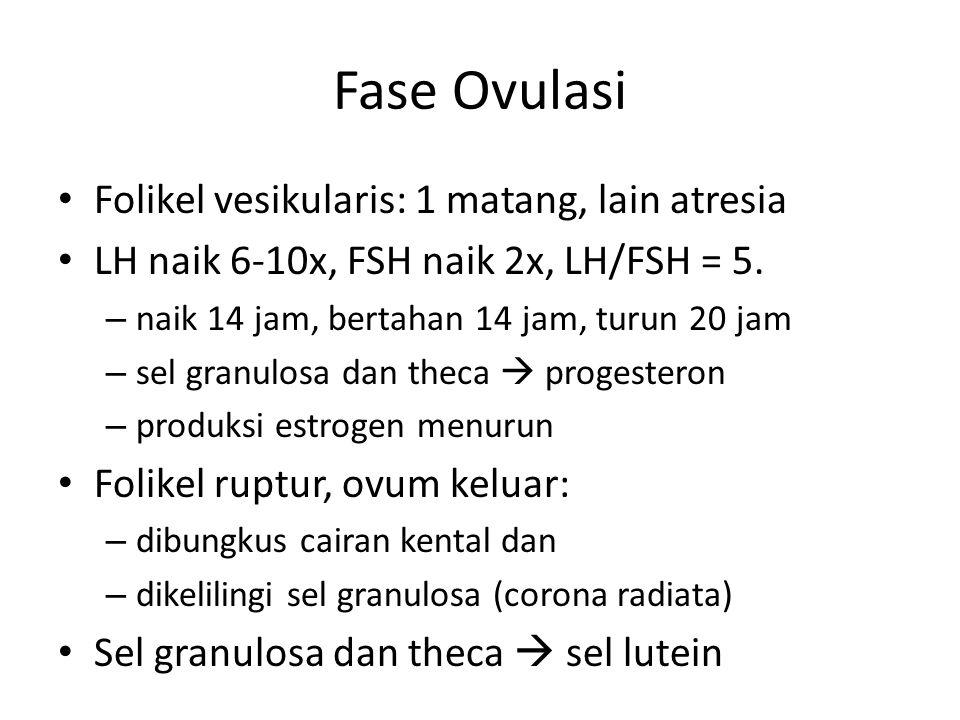 Fase Ovulasi Folikel vesikularis: 1 matang, lain atresia