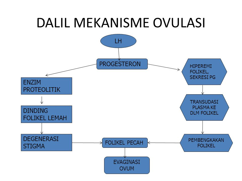 DALIL MEKANISME OVULASI