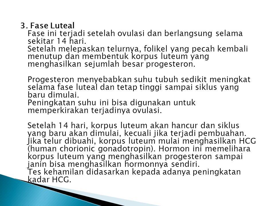 3. Fase Luteal Fase ini terjadi setelah ovulasi dan berlangsung selama sekitar 14 hari.