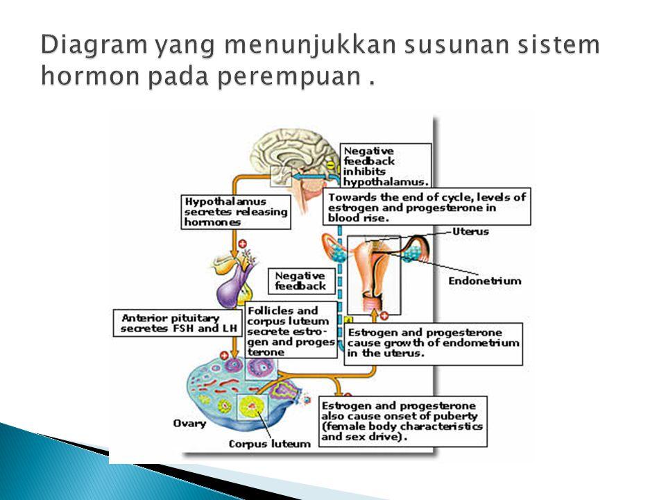 Diagram yang menunjukkan susunan sistem hormon pada perempuan .
