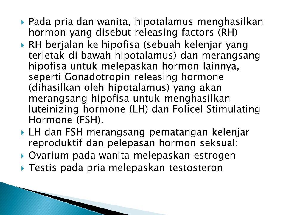 Pada pria dan wanita, hipotalamus menghasilkan hormon yang disebut releasing factors (RH)