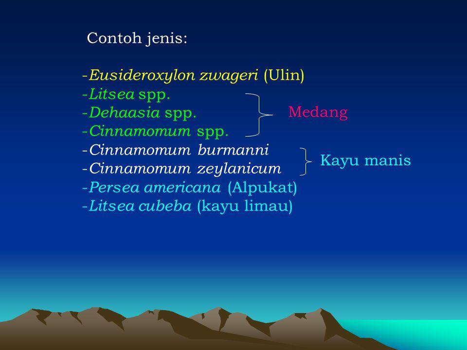 Contoh jenis: Eusideroxylon zwageri (Ulin) Litsea spp. Dehaasia spp. Cinnamomum spp. Cinnamomum burmanni.