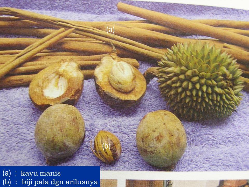 (a) (b) : kayu manis : biji pala dgn arilusnya