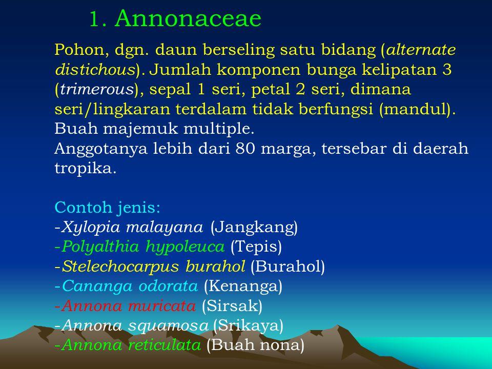 1. Annonaceae