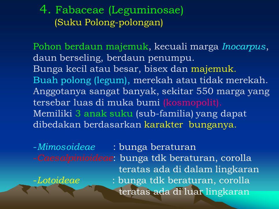 4. Fabaceae (Leguminosae)