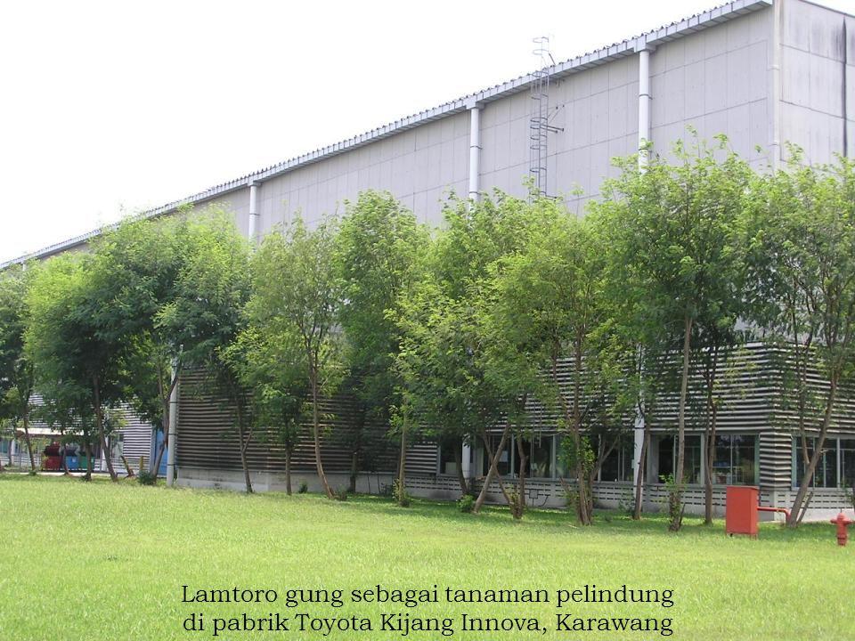 Lamtoro gung sebagai tanaman pelindung