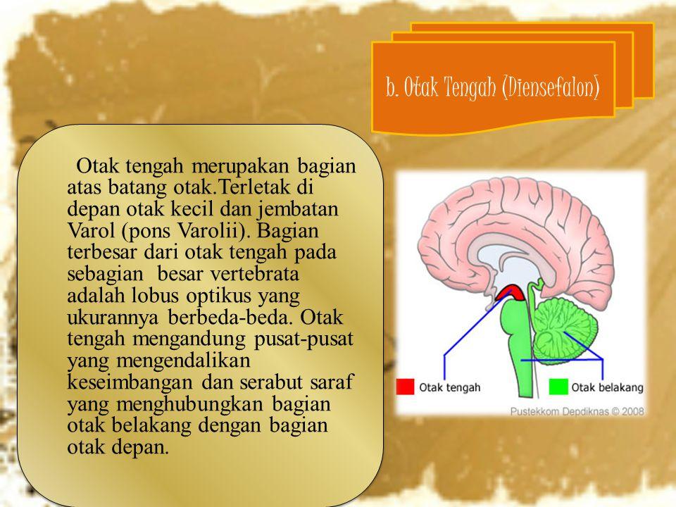 b. Otak Tengah (Diensefalon)