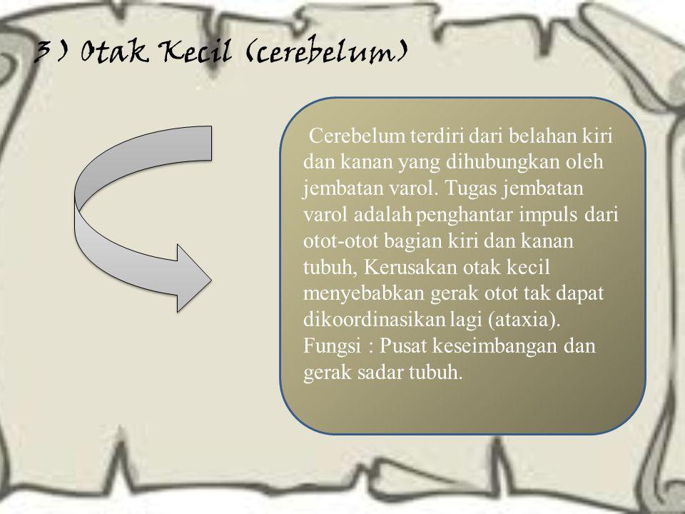 3 ) Otak Kecil (cerebelum)