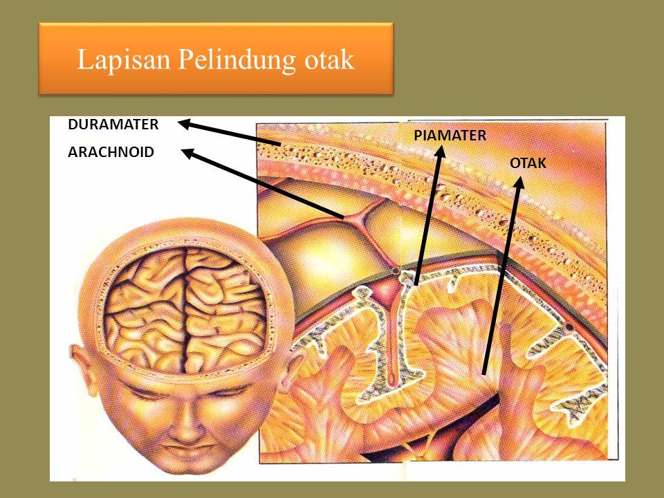 Lapisan Pelindung otak