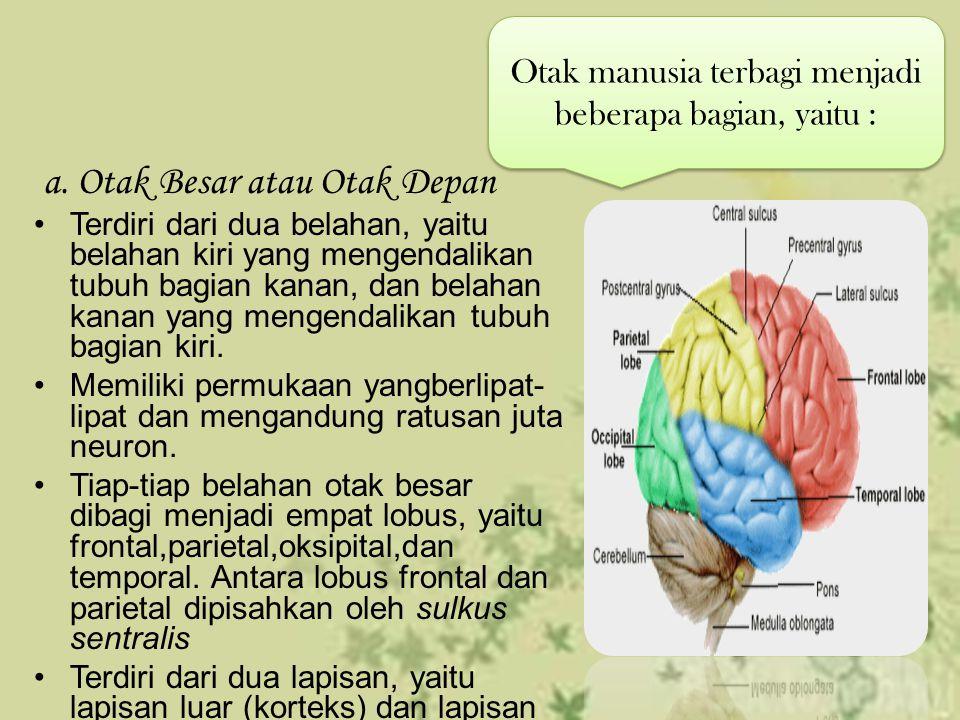 Otak manusia terbagi menjadi beberapa bagian, yaitu :
