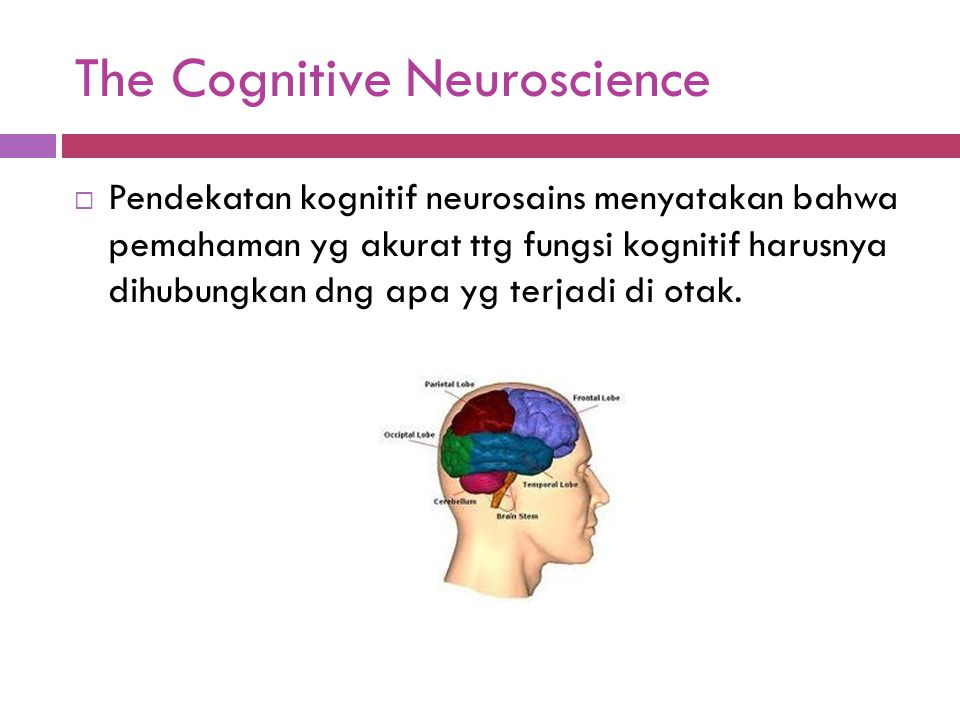 The Cognitive Neuroscience