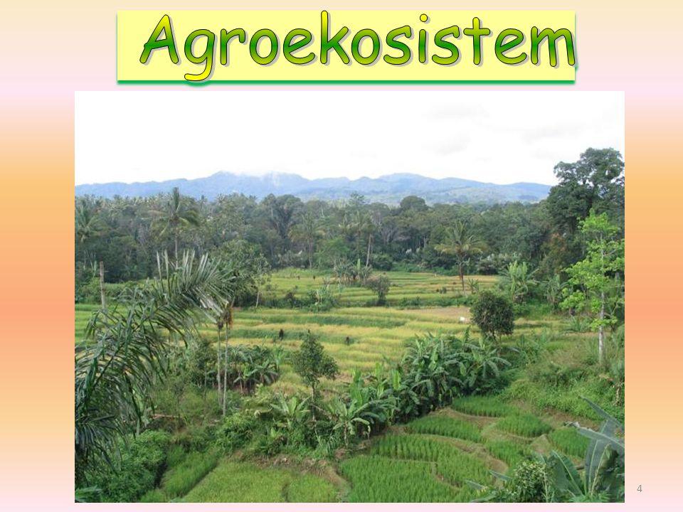 Agroekosistem