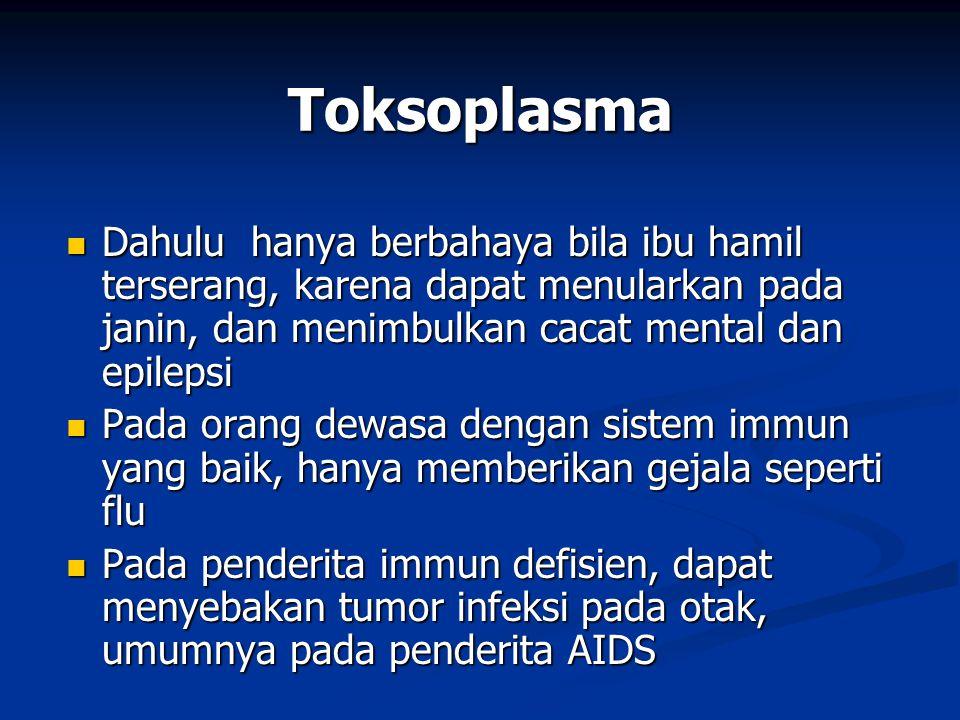 Toksoplasma Dahulu hanya berbahaya bila ibu hamil terserang, karena dapat menularkan pada janin, dan menimbulkan cacat mental dan epilepsi.