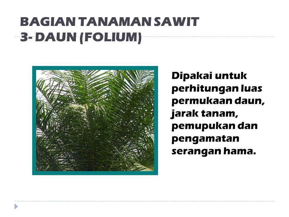 BAGIAN TANAMAN SAWIT 3- DAUN (FOLIUM)