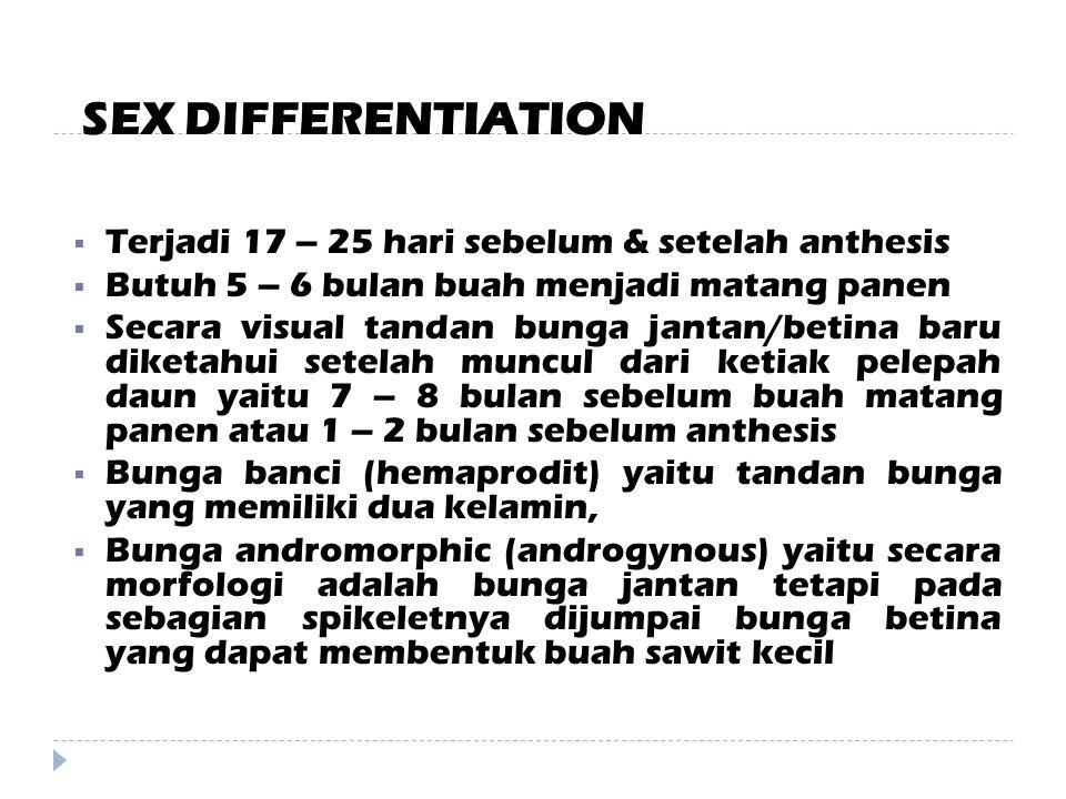 SEX DIFFERENTIATION Terjadi 17 – 25 hari sebelum & setelah anthesis