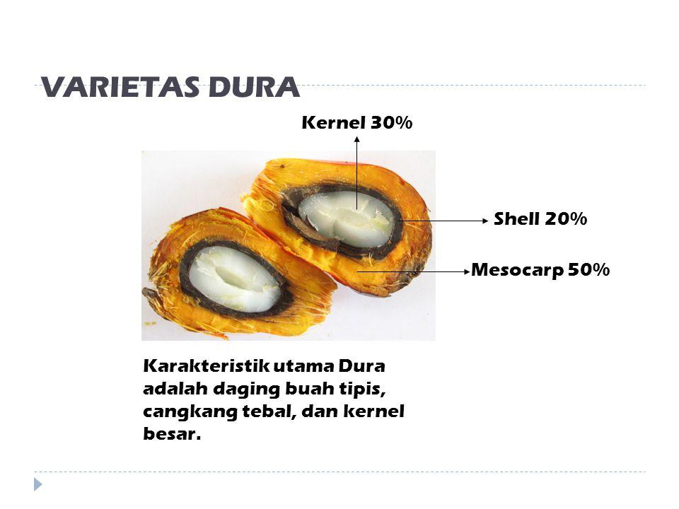 VARIETAS DURA Kernel 30% Shell 20% Mesocarp 50%