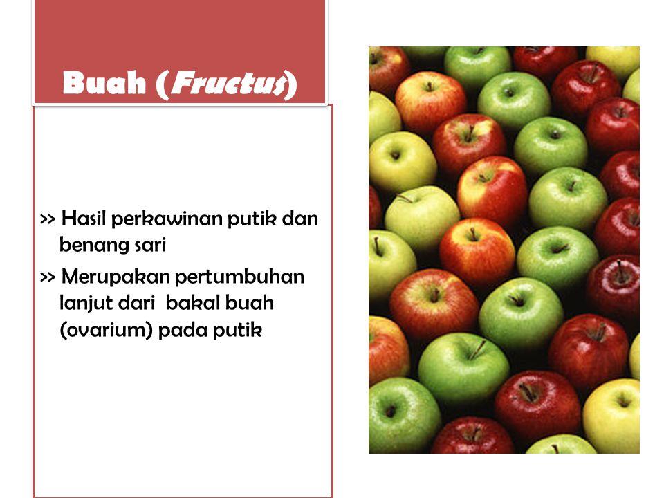Buah (Fructus) >> Hasil perkawinan putik dan benang sari