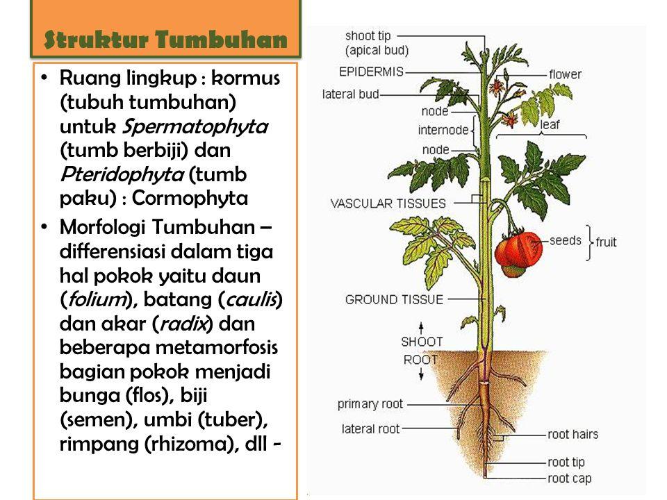 Struktur Tumbuhan Ruang lingkup : kormus (tubuh tumbuhan) untuk Spermatophyta (tumb berbiji) dan Pteridophyta (tumb paku) : Cormophyta.