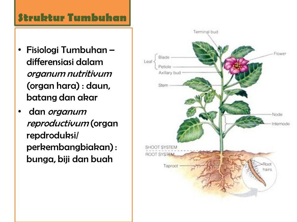 Struktur Tumbuhan Fisiologi Tumbuhan – differensiasi dalam organum nutritivum (organ hara) : daun, batang dan akar.