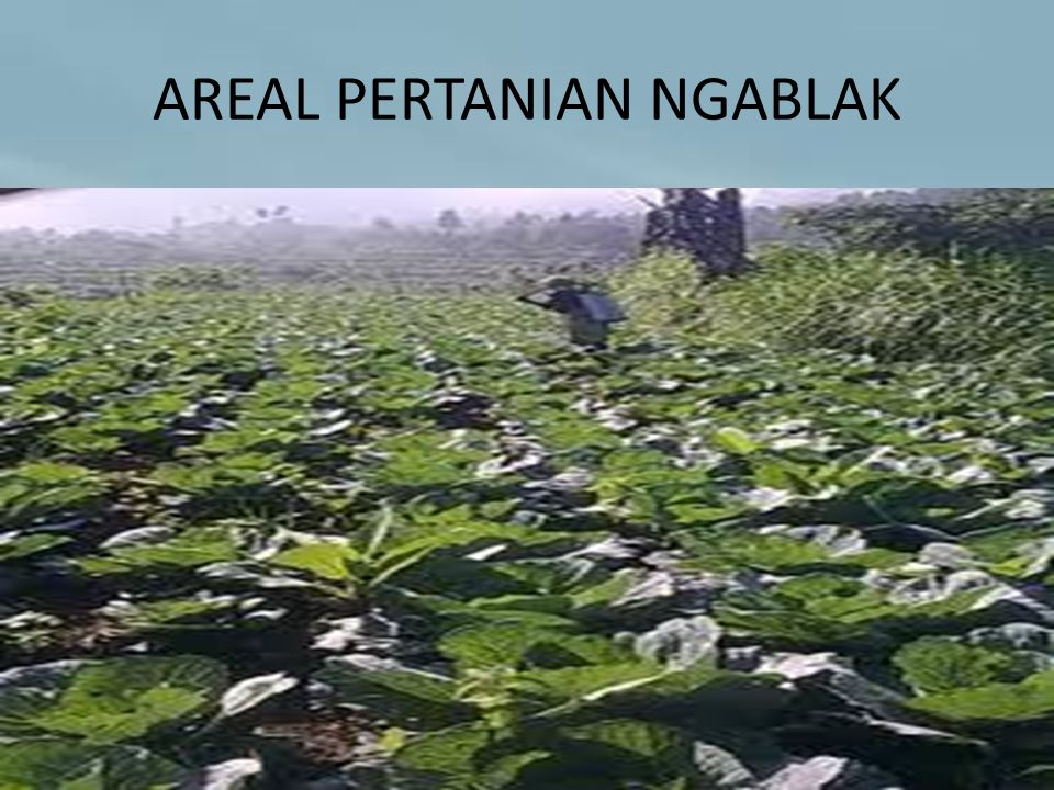 AREAL PERTANIAN NGABLAK